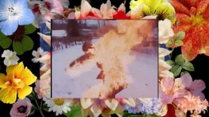composite image of a person on fire superimposed over a photo of brightly-coloured flowers